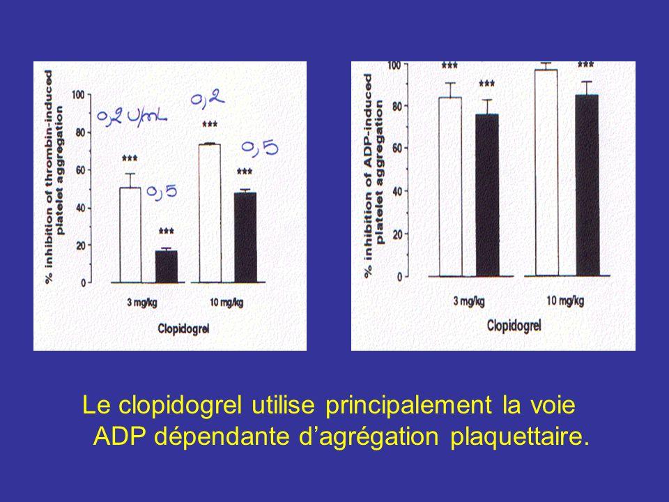 Le clopidogrel utilise principalement la voie ADP dépendante dagrégation plaquettaire.