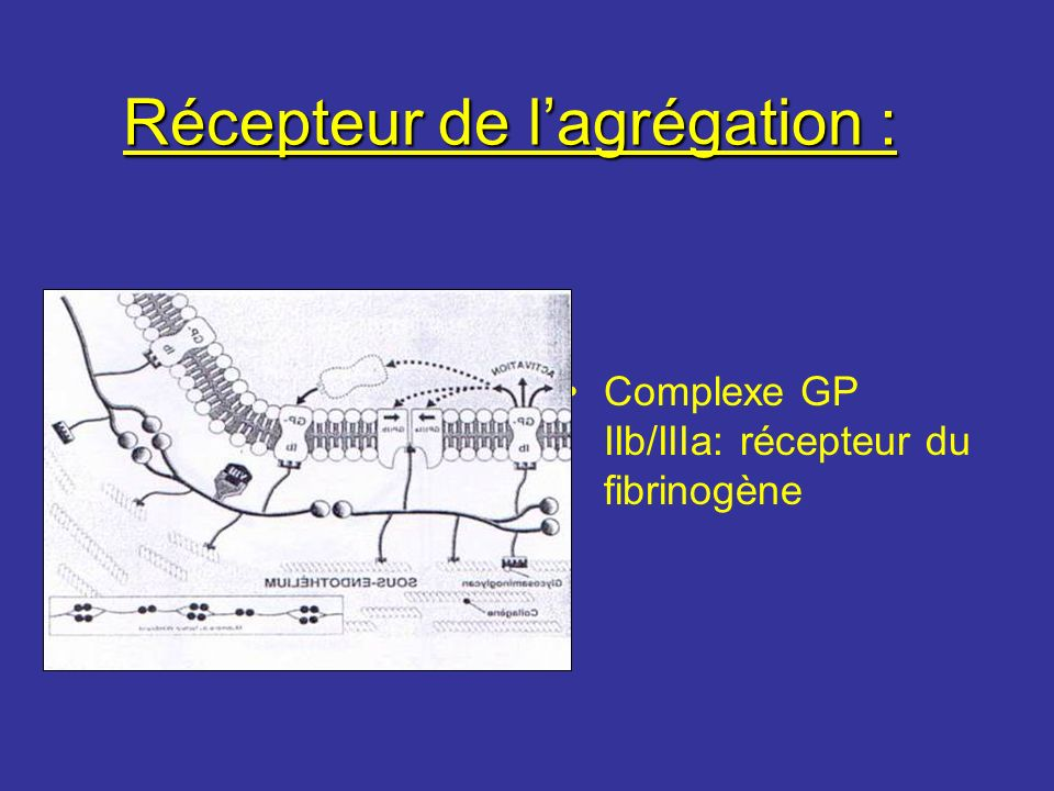 Récepteur de lagrégation : Complexe GP IIb/IIIa: récepteur du fibrinogène