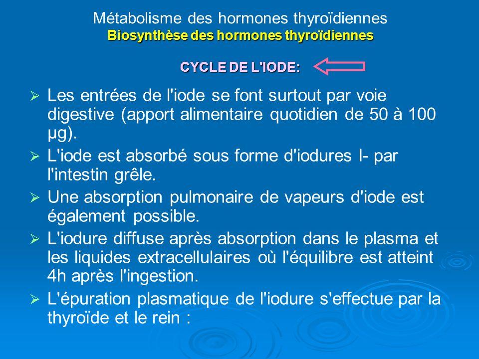 Biosynthèse des hormones thyroïdiennes CYCLE DE L IODE: Métabolisme des hormones thyroïdiennes Biosynthèse des hormones thyroïdiennes CYCLE DE L IODE: Les entrées de l iode se font surtout par voie digestive (apport alimentaire quotidien de 50 à 100 µg).