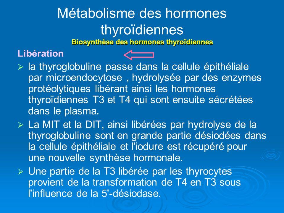 Métabolisme des hormones thyroïdiennes Biosynthèse des hormones thyroïdiennes Libération la thyroglobuline passe dans la cellule épithéliale par microendocytose, hydrolysée par des enzymes protéolytiques libérant ainsi les hormones thyroïdiennes T3 et T4 qui sont ensuite sécrétées dans le plasma.