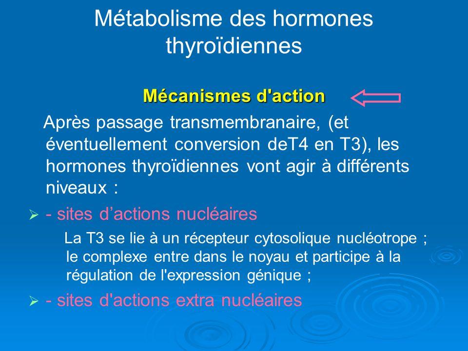 Métabolisme des hormones thyroïdiennes Mécanismes d action Après passage transmembranaire, (et éventuellement conversion deT4 en T3), les hormones thyroïdiennes vont agir à différents niveaux : - sites dactions nucléaires La T3 se lie à un récepteur cytosolique nucléotrope ; le complexe entre dans le noyau et participe à la régulation de l expression génique ; - sites d actions extra nucléaires