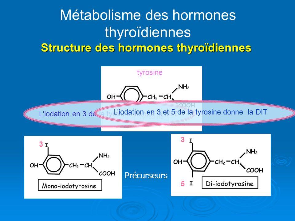 Structure des hormones thyroïdiennes Métabolisme des hormones thyroïdiennes Structure des hormones thyroïdiennes Précurseurs tyrosine 3 3 5 Liodation en 3 de la tyrosine donne la MIT Liodation en 3 et 5 de la tyrosine donne la DIT