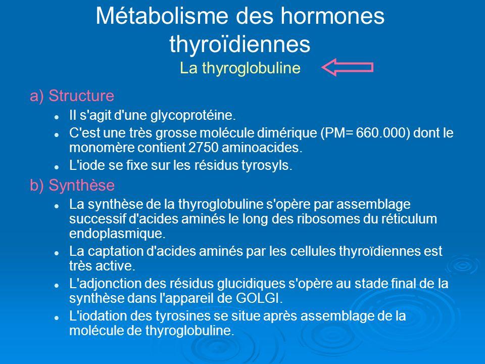 Métabolisme des hormones thyroïdiennes La thyroglobuline a) Structure Il s'agit d'une glycoprotéine. C'est une très grosse molécule dimérique (PM= 660