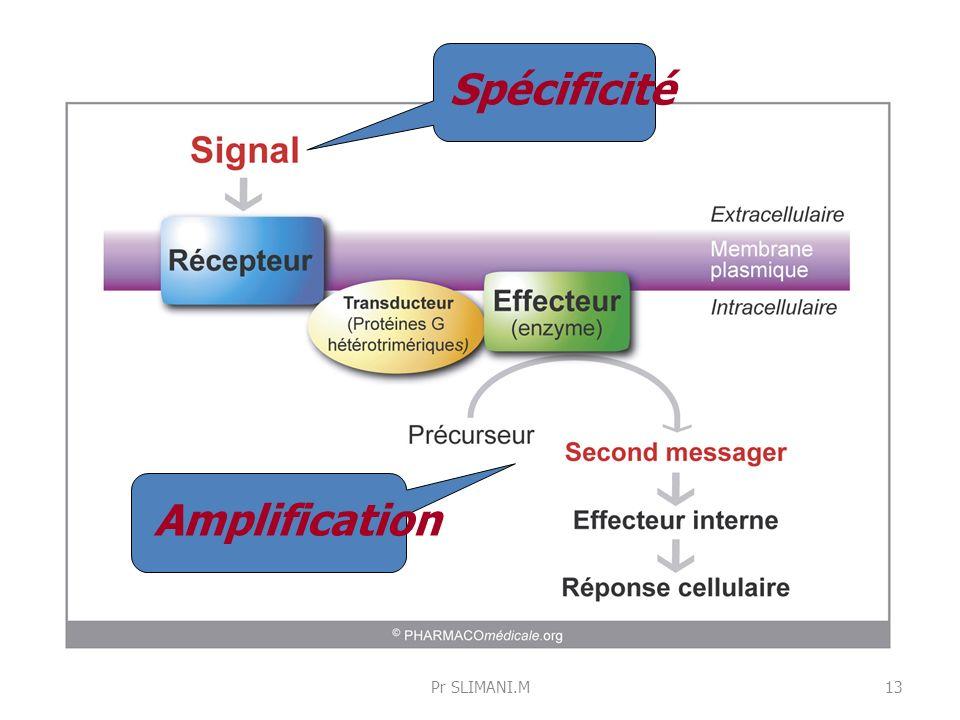 Spécificité Amplification 13Pr SLIMANI.M