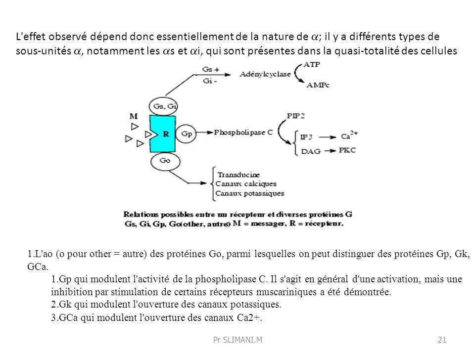 L'effet observé dépend donc essentiellement de la nature de ; il y a différents types de sous-unités, notamment les s et i, qui sont présentes dans la