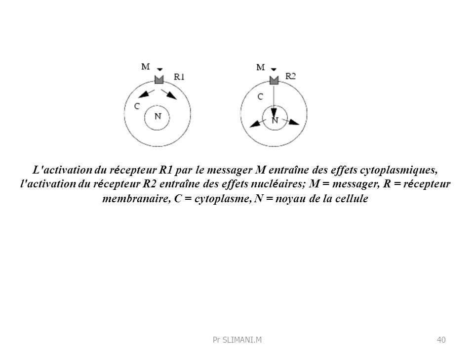 L'activation du r é cepteur R1 par le messager M entra î ne des effets cytoplasmiques, l'activation du r é cepteur R2 entra î ne des effets nucl é air