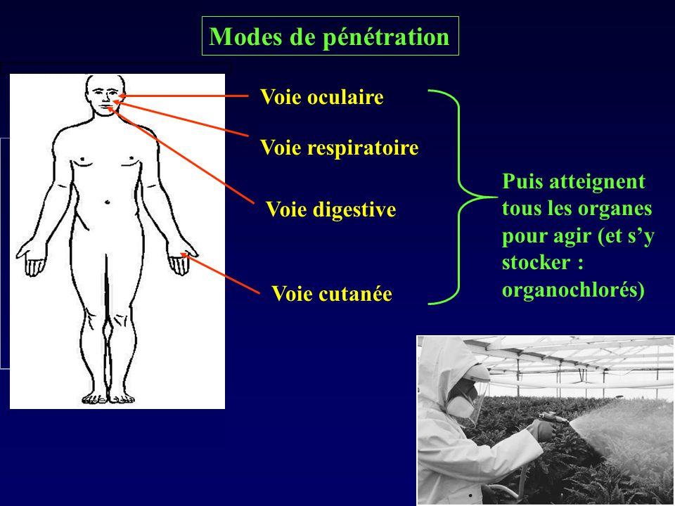 Modes de pénétration Voie oculaire Voie respiratoire Voie digestive Voie cutanée Puis atteignent tous les organes pour agir (et sy stocker : organochl