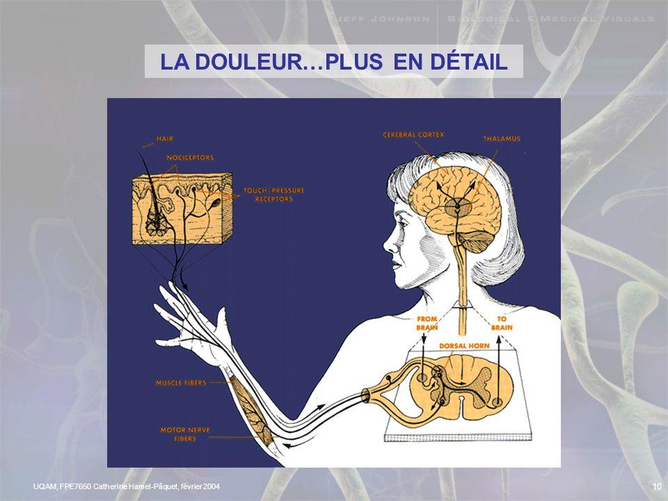 UQAM, FPE7650 Catherine Hamel-Pâquet, février 2004 9 LES NEURONES NOCICEPTIFS AU NIVEAU DE LA PEAU