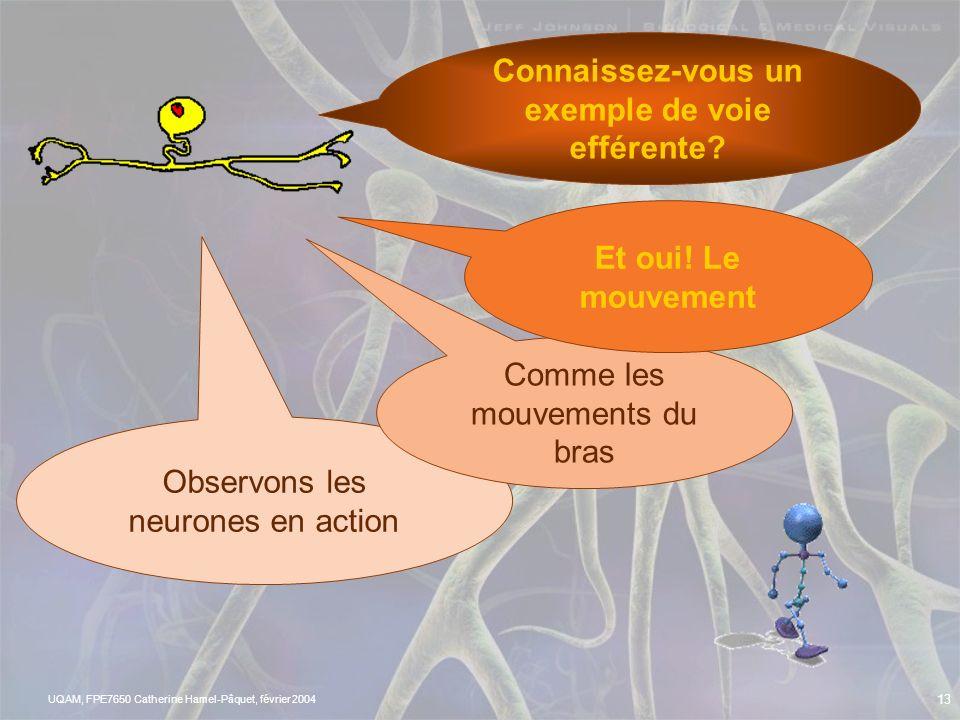 UQAM, FPE7650 Catherine Hamel-Pâquet, février 2004 12 LES RÉSEAUX EN COMPÉTITION