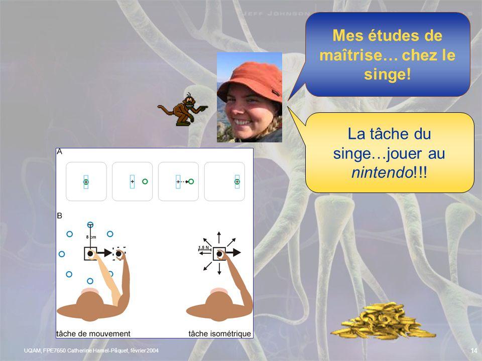 UQAM, FPE7650 Catherine Hamel-Pâquet, février 2004 13 Connaissez-vous un exemple de voie efférente? Observons les neurones en action Comme les mouveme