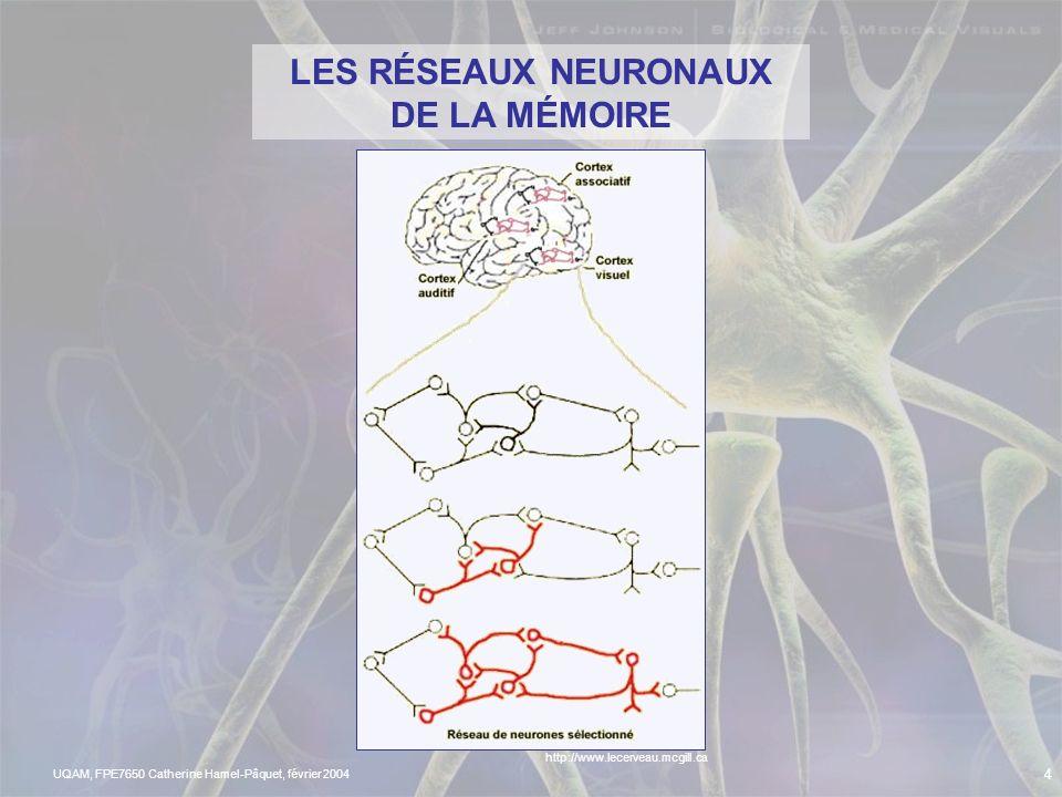 UQAM, FPE7650 Catherine Hamel-Pâquet, février 2004 3 Que pensez- vous de la mémoire? Et ça permet à linflux nerveux de voyager! Les synapses me relien