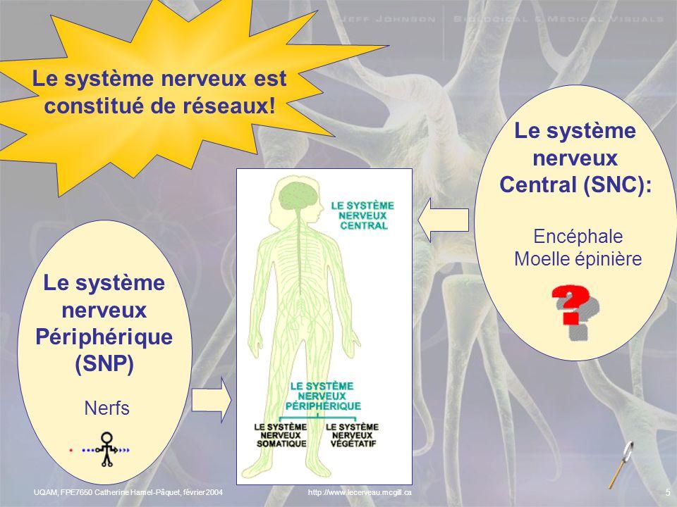 UQAM, FPE7650 Catherine Hamel-Pâquet, février 2004 4 LES RÉSEAUX NEURONAUX DE LA MÉMOIRE http://www.lecerveau.mcgill.ca