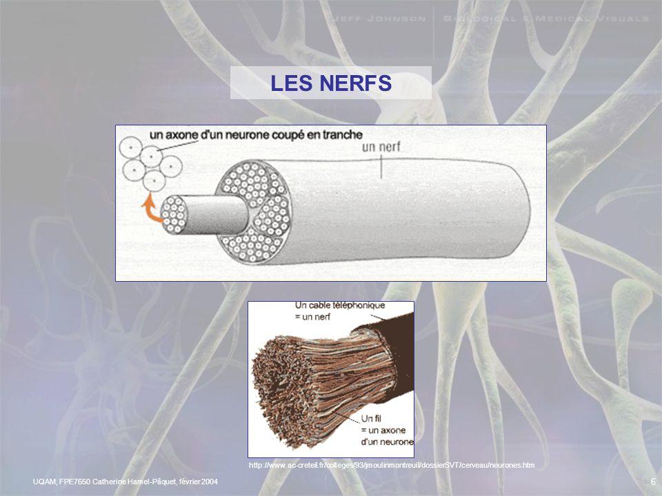 UQAM, FPE7650 Catherine Hamel-Pâquet, février 2004 5 Le système nerveux est constitué de réseaux! Le système nerveux Central (SNC): Encéphale Moelle é