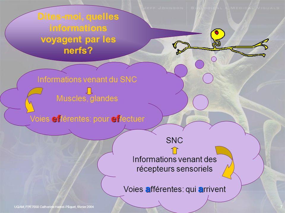 UQAM, FPE7650 Catherine Hamel-Pâquet, février 2004 6 LES NERFS http://www.ac-creteil.fr/colleges/93/jmoulinmontreuil/dossierSVT/cerveau/neurones.htm