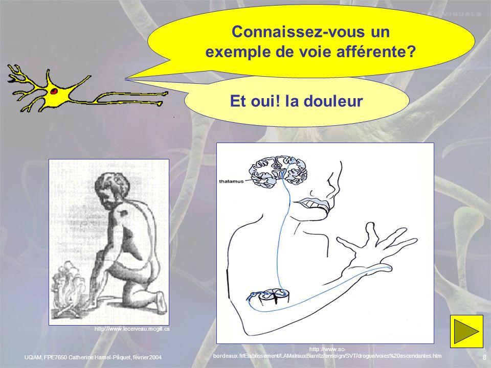 UQAM, FPE7650 Catherine Hamel-Pâquet, février 2004 7 Dites-moi, quelles informations voyagent par les nerfs? Informations venant du SNC Muscles, gland