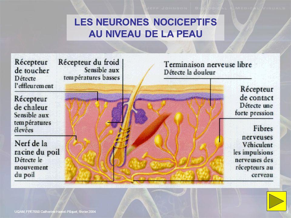 UQAM, FPE7650 Catherine Hamel-Pâquet, février 2004 8 http://www.ac- bordeaux.fr/Etablissement/LAMalrauxBiarritz/enseign/SVT/drogue/voies%20ascendantes