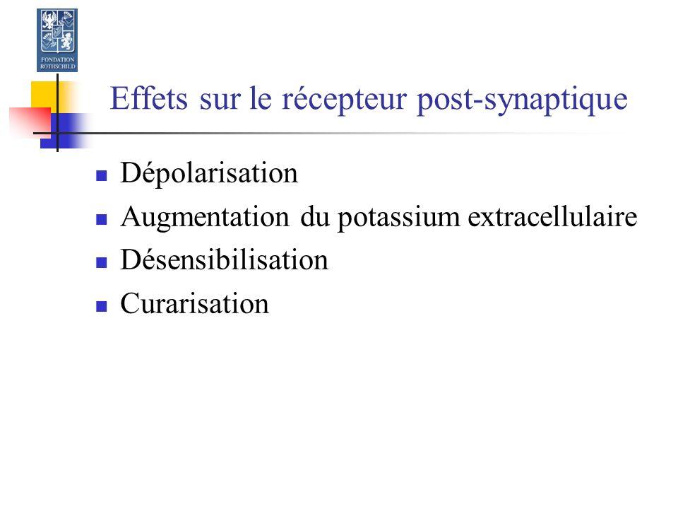 Effets sur le récepteur post-synaptique Dépolarisation Augmentation du potassium extracellulaire Désensibilisation Curarisation