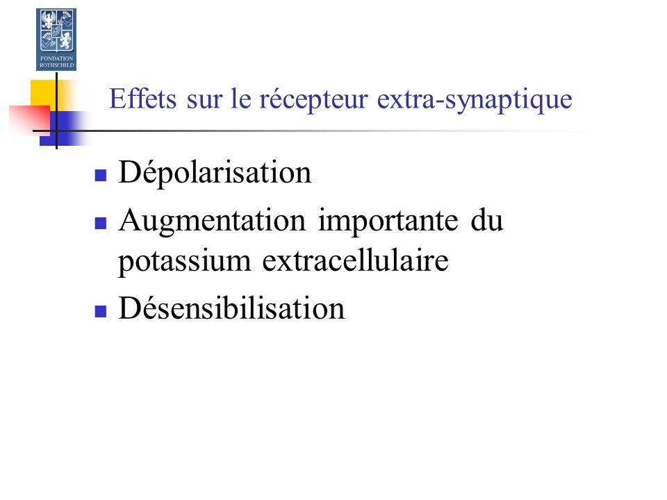 Effets sur le récepteur extra-synaptique Dépolarisation Augmentation importante du potassium extracellulaire Désensibilisation