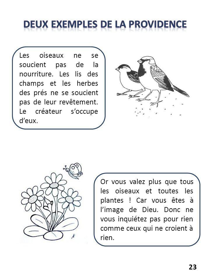23 Les oiseaux ne se soucient pas de la nourriture. Les lis des champs et les herbes des prés ne se soucient pas de leur revêtement. Le créateur soccu