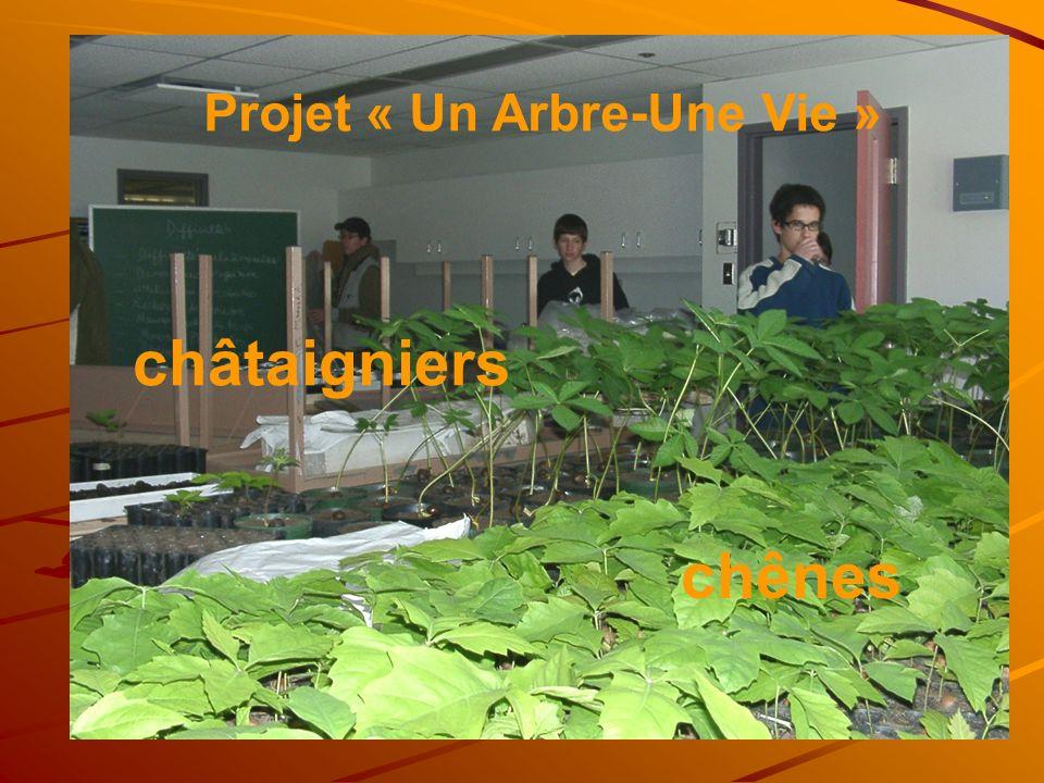 chênes châtaigniers Projet « Un Arbre-Une Vie »