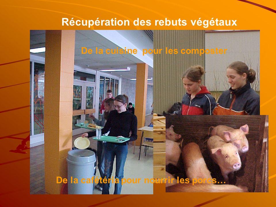 Récupération des rebuts végétaux De la cuisine pour les composter De la cafétéria pour nourrir les porcs…