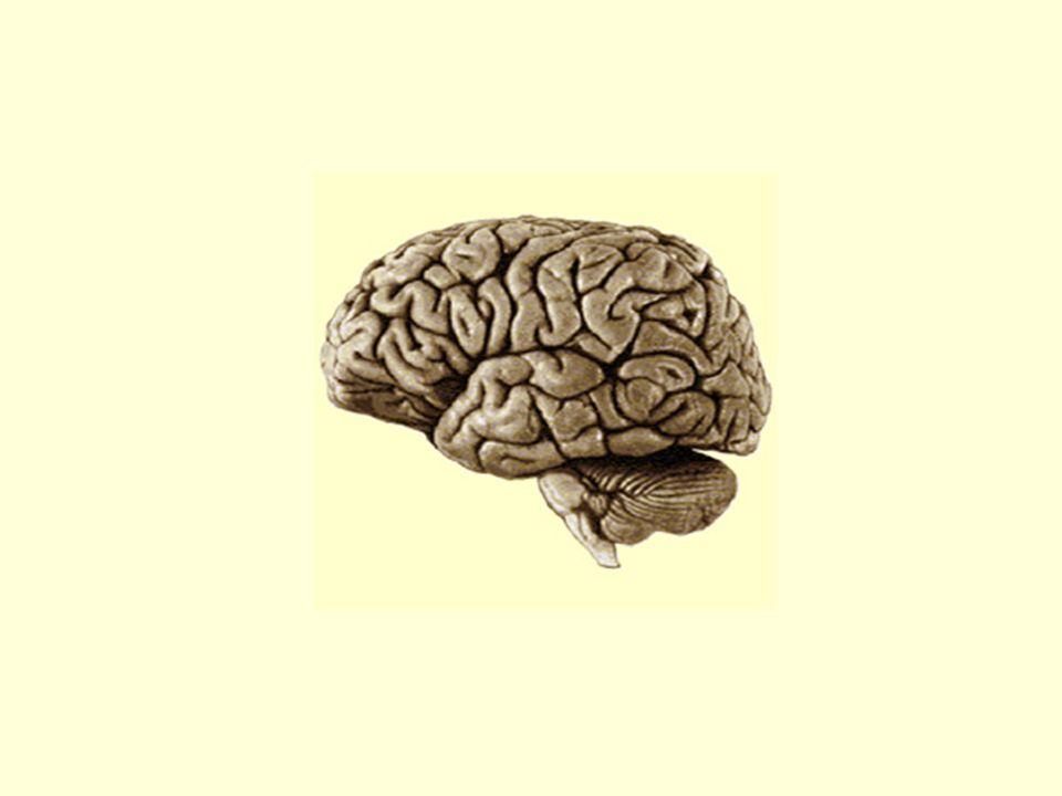 Étudiant Dénouement : statu quo - Retour à linsatisfaction chronique et au sentiment dimpuissance - Retour de linhibition de laction avec les conséquences néfastes que lon sait