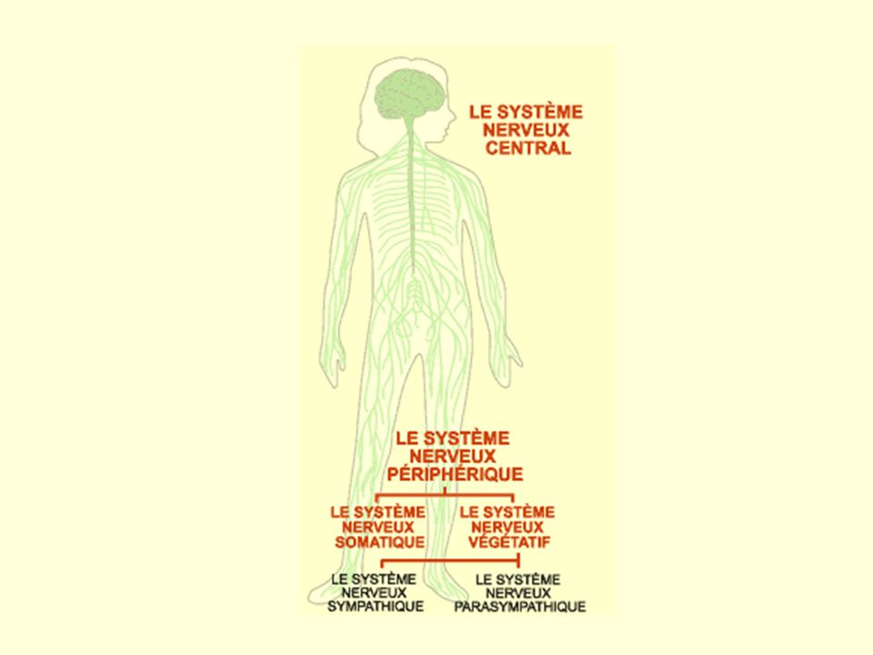 ÉtudiantAdminis- trateur Insatisfaction étudiante Inhibition de laction Dominance maintenue, donc équilibre Contestation étudiante Lutte possible, équilibre retrouvé Dominance contestée, donc état de stress Dénouement : statu quo Inhibition de laction Dénouement : révolution