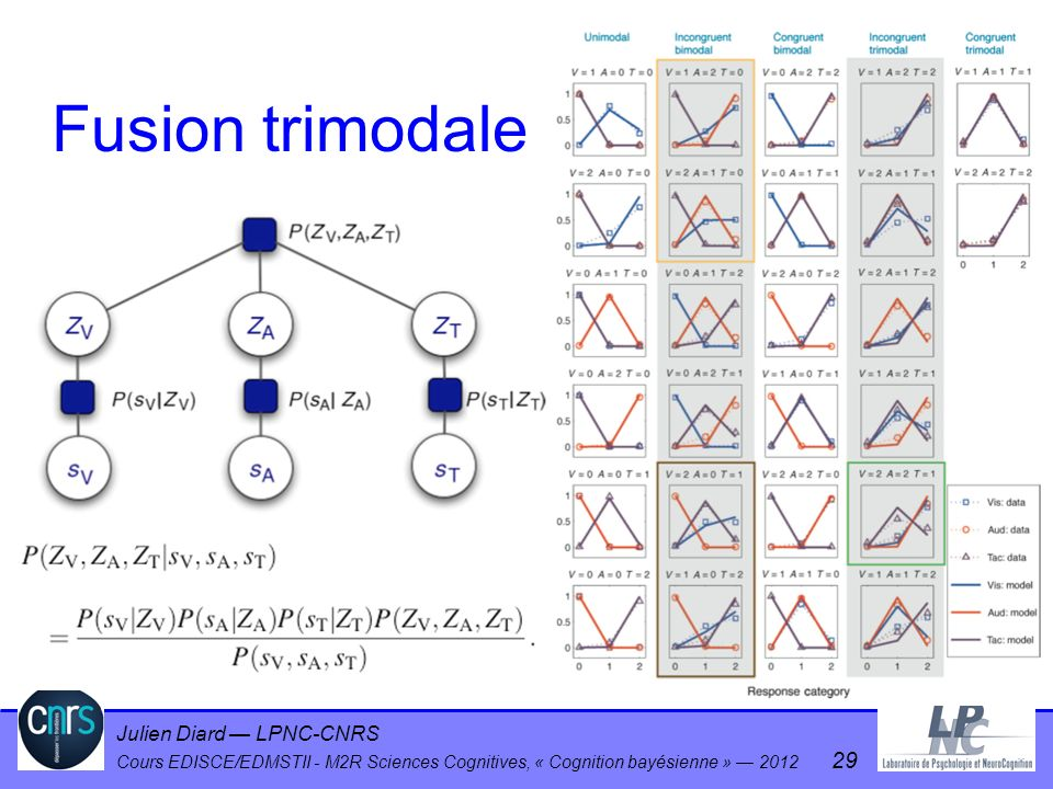 Julien Diard LPNC-CNRS Cours EDISCE/EDMSTII - M2R Sciences Cognitives, « Cognition bayésienne » 2012 29 Fusion trimodale