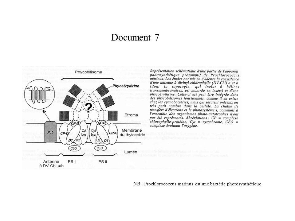 Document 7 NB : Prochlorococcus marinus est une bactérie photosynthétique
