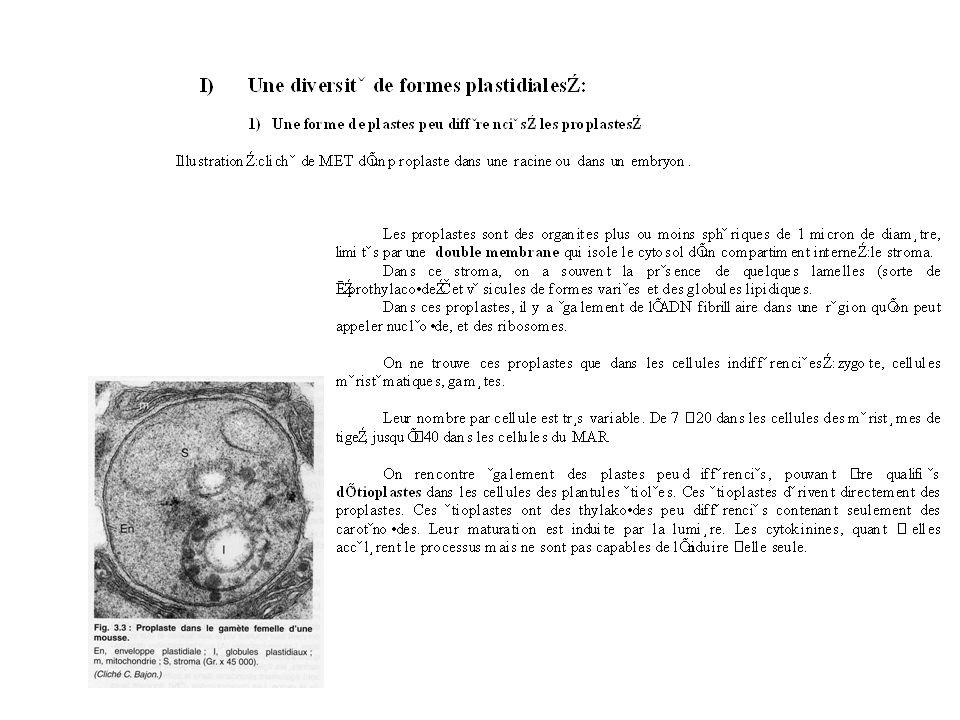 3) Vers une différenciation des formes plastidiales : Comme nous venons de le voir, les plastes ont tous une origine commune endosymbiotique.
