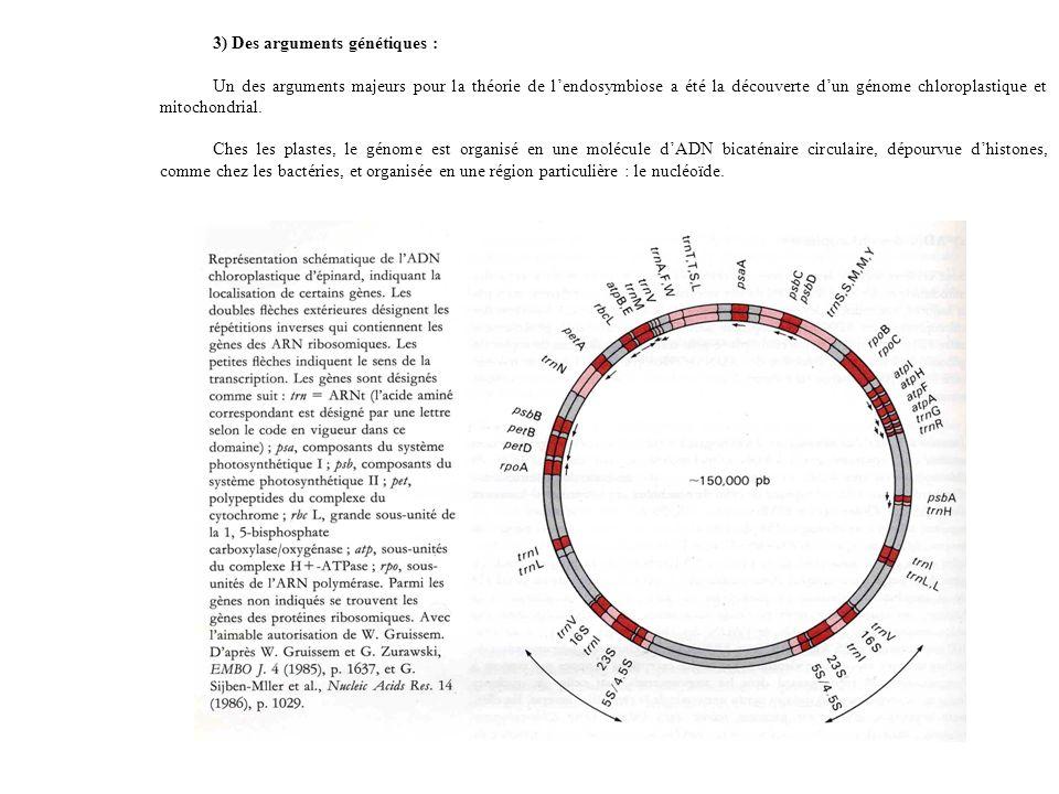 3) Des arguments génétiques : Un des arguments majeurs pour la théorie de lendosymbiose a été la découverte dun génome chloroplastique et mitochondrial.