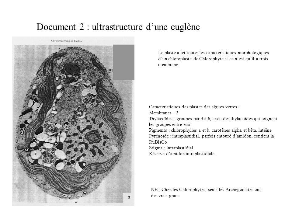 Document 2 : ultrastructure dune euglène Le plaste a ici toutes les caractéristiques morphologiques dun chloroplaste de Chlorophyte si ce nest quil a trois membrane Caractéristiques des plastes des algues vertes : Membranes : 2 Thylacoïdes : groupés par 3 à 6, avec des thylacoïdes qui joignent les groupes entre eux Pigments : chlorophylles a et b, carotènes alpha et bêta, lutéine Pyrénoïde : intraplastidial, parfois entouré damidon, contient la RuBisCo Stigma : intraplastidial Réserve damidon intraplastidiale NB : Chez les Chlorophytes, seuls les Archégoniates ont des vrais grana