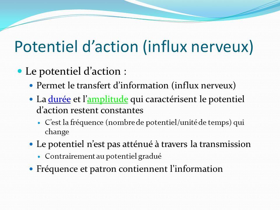 Potentiel daction (influx nerveux) Le potentiel daction : Permet le transfert dinformation (influx nerveux) La durée et lamplitude qui caractérisent l