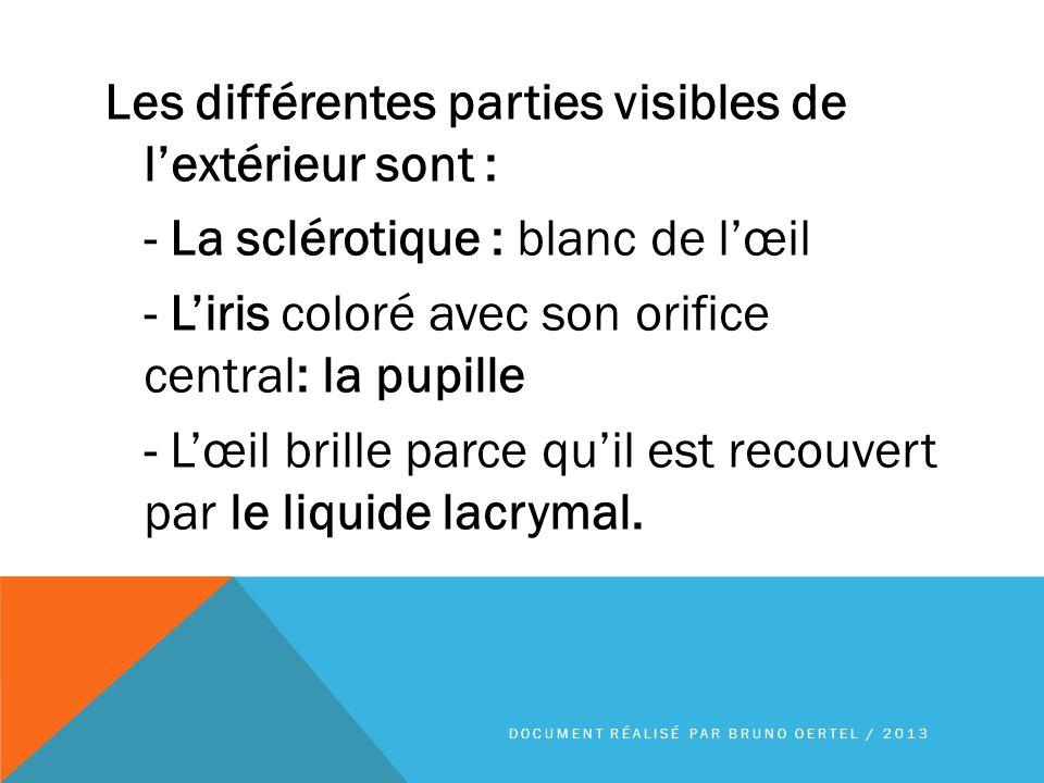 Les différentes parties visibles de lextérieur sont : - La sclérotique : blanc de lœil - Liris coloré avec son orifice central: la pupille - Lœil bril