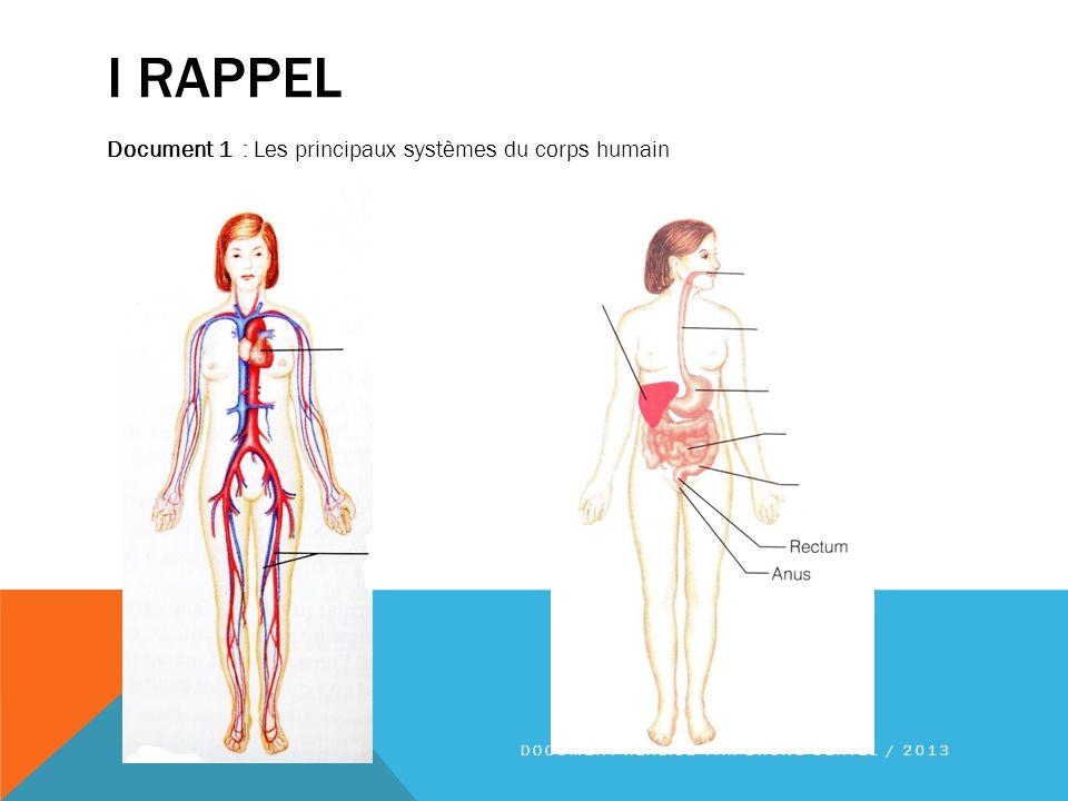 I RAPPEL Document 1 : Les principaux systèmes du corps humain DOCUMENT RÉALISÉ PAR BRUNO OERTEL / 2013