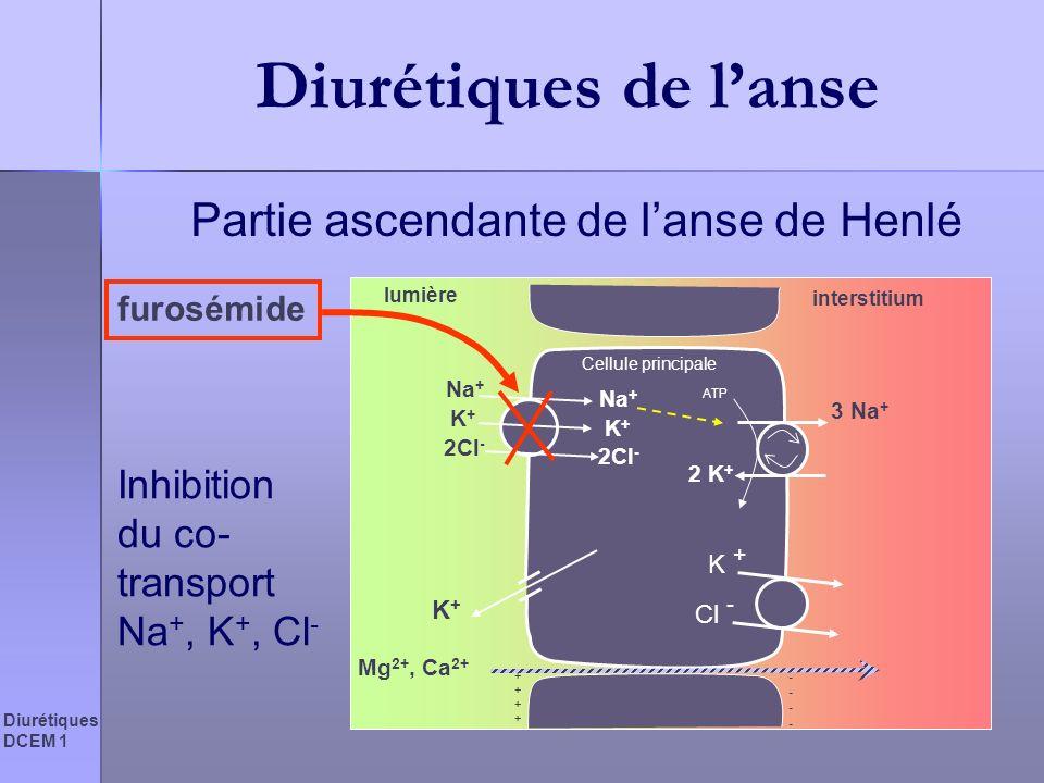 Diurétiques DCEM 1 Diurétiques de lanse Partie ascendante de lanse de Henlé Cellule principale lumière interstitium 3 Na + 2 K + ATP Na + K+K+ K+K+ 2C