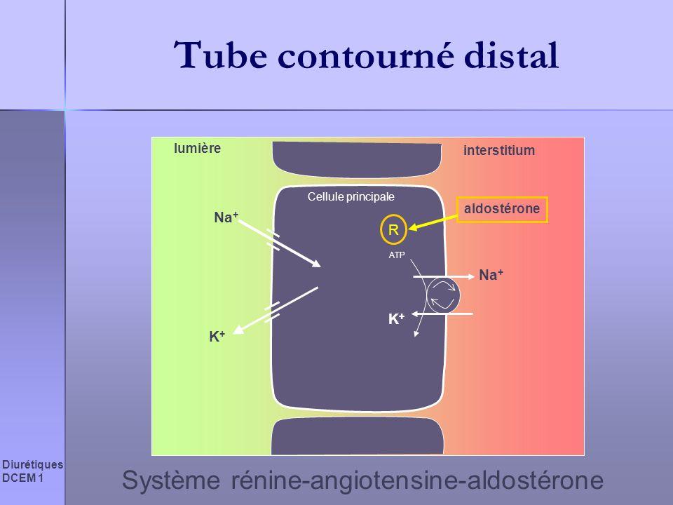 Diurétiques DCEM 1 Tube contourné distal Cellule principale lumière interstitium Na + K+K+ ATP Na + K+K+ aldostérone R Système rénine-angiotensine-ald