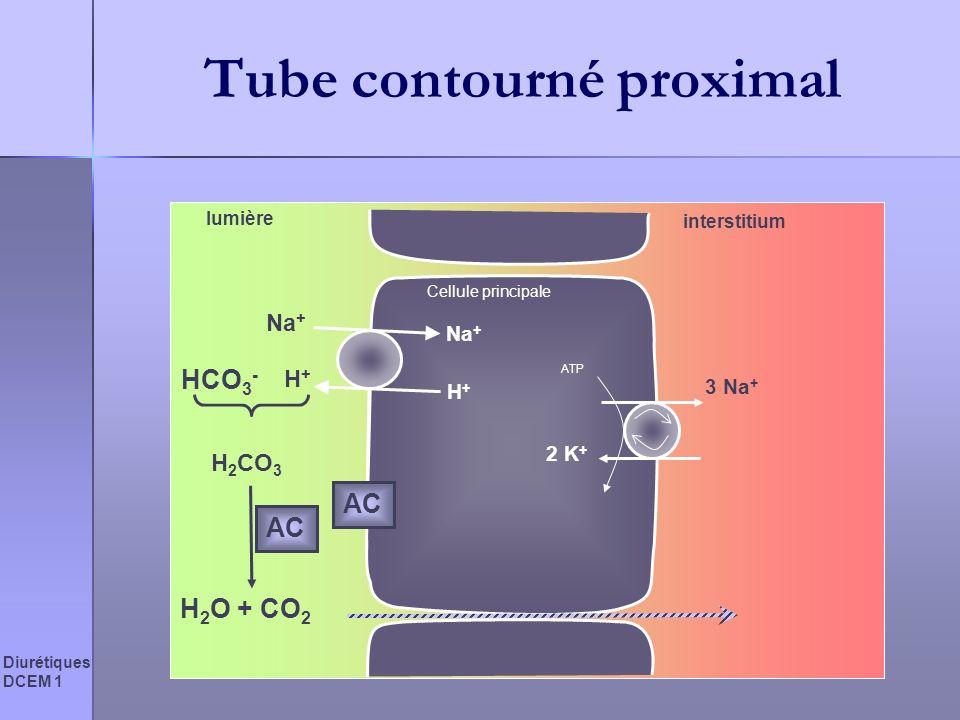 Diurétiques DCEM 1 Tube contourné proximal Cellule principale lumière interstitium 3 Na + 2 K + ATP Na + H+H+ H+H+ HCO 3 - H 2 CO 3 H 2 O + CO 2 AC