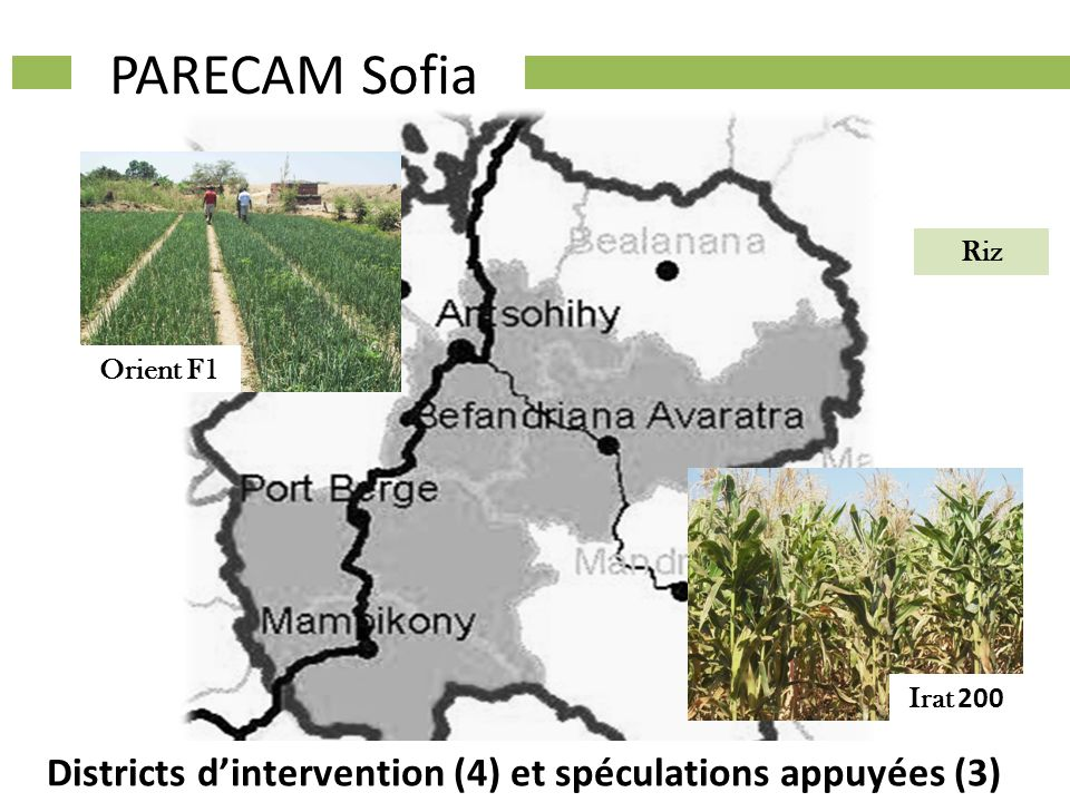Districts dintervention (4) et spéculations appuyées (3) Riz PARECAM Sofia Orient F1 Irat 200