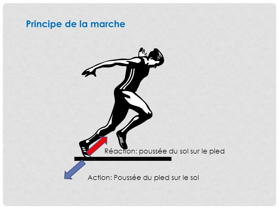 Principe de la marche Action: Poussée du pied sur le sol Réaction: poussée du sol sur le pied