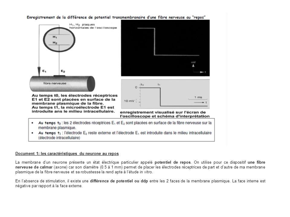 Document 1: les caractéristiques du neurone au repos La membrane dun neurone présente un état électrique particulier appelé potentiel de repos.