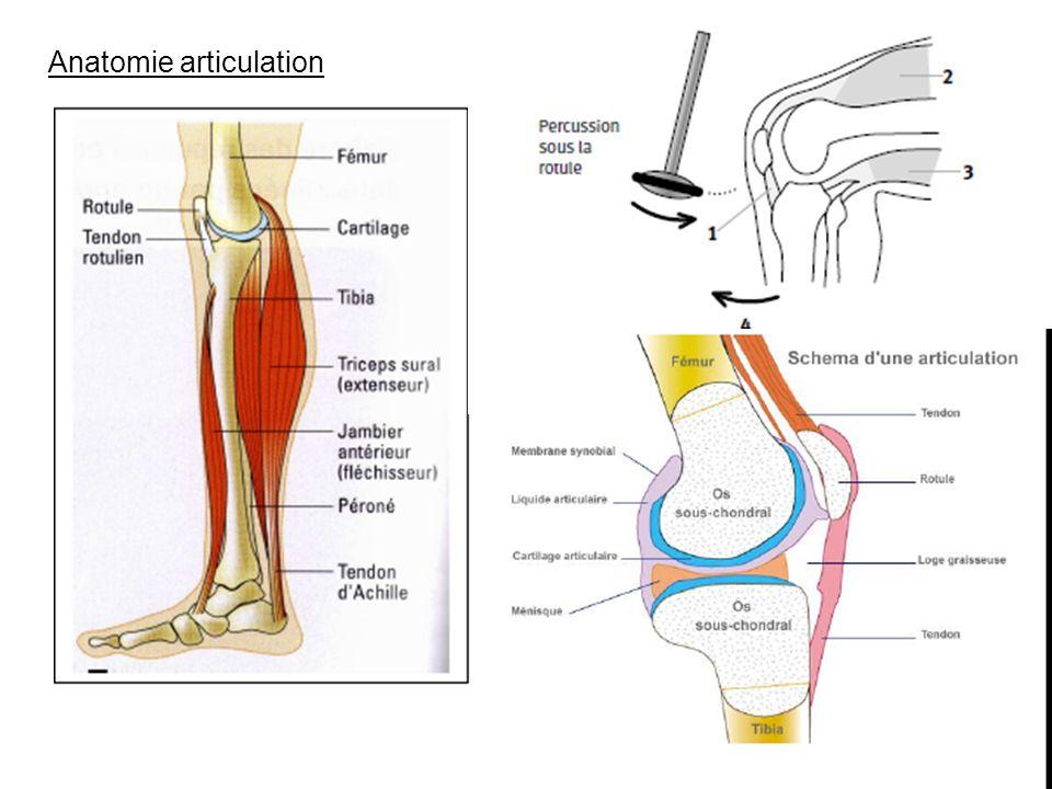 Anatomie articulation