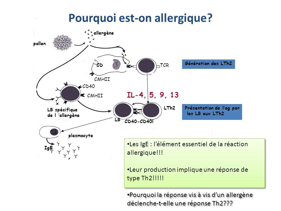 pollen allergène LTCD4 CD CMHII TCR CD40 CMHII x LB spécifique de l allergène LTh2 CD40l LTh2 LB IgE CD40-CD40l Présentation de lag par les LB aux LTh