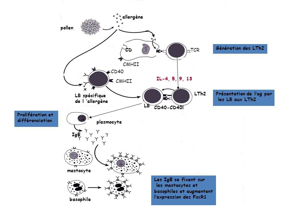 Anti-IgE couplé à la phase solide Allergène couplé à la phase solide Disque de papier ou bille dagarose Prist test Rast (radioallergosorbent test) ou East (enzyme allergosorbent test)
