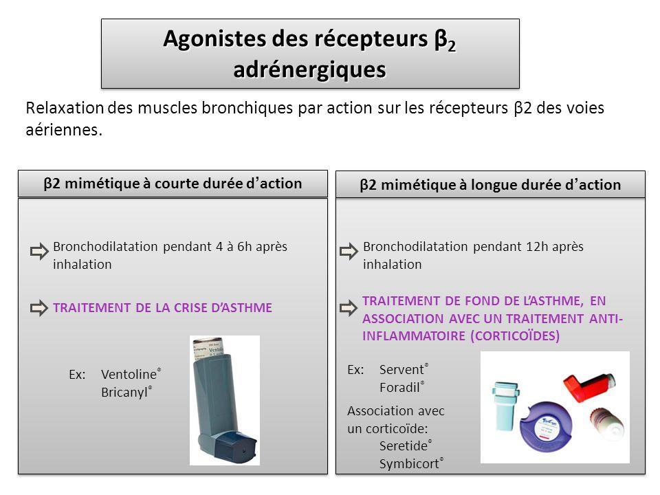 Agonistes des récepteurs β 2 adrénergiques Relaxation des muscles bronchiques par action sur les récepteurs β2 des voies aériennes. β2 mimétique à cou