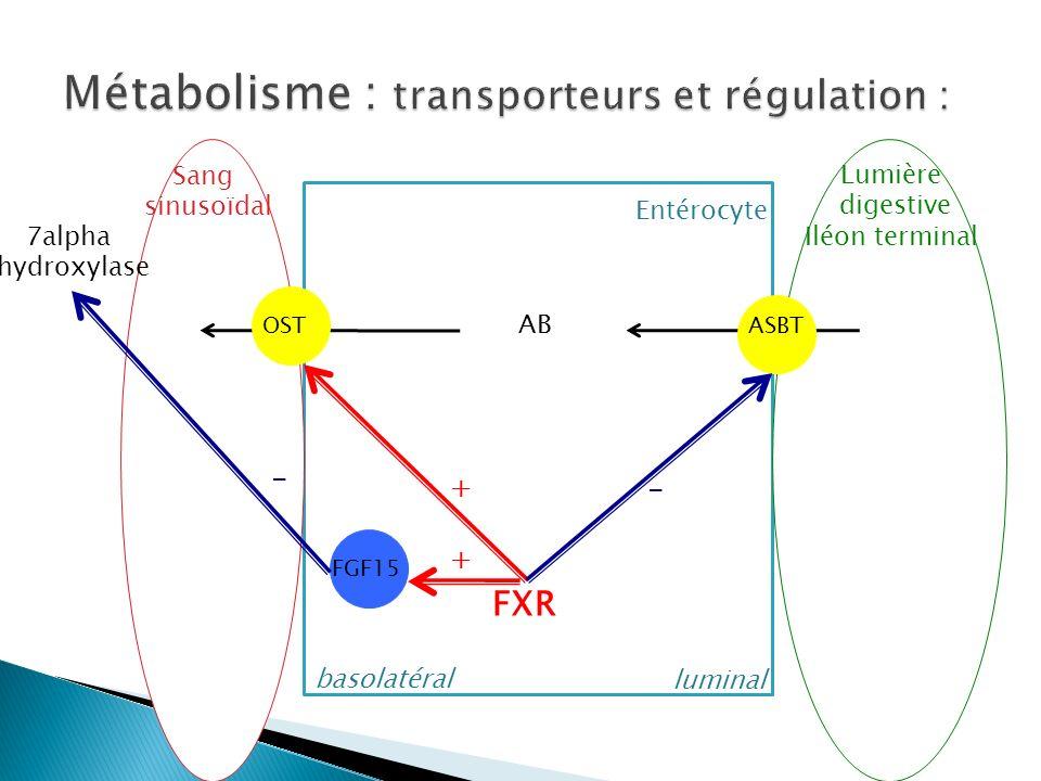 BSE Sang sinusoïdal Entérocyte luminal basolatéral Lumière digestive Iléon terminal AB OSTASBT FXR + - FGF15 + - 7alpha hydroxylase