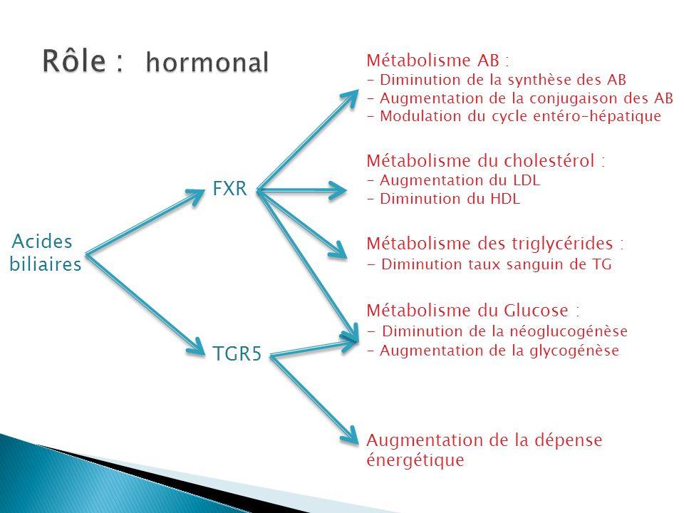 Acides biliaires FXR TGR5 Métabolisme AB : - Diminution de la synthèse des AB - Augmentation de la conjugaison des AB - Modulation du cycle entéro-hépatique Métabolisme du cholestérol : - Augmentation du LDL - Diminution du HDL Métabolisme des triglycérides : - Diminution taux sanguin de TG Métabolisme du Glucose : - Diminution de la néoglucogénèse - Augmentation de la glycogénèse Augmentation de la dépense énergétique