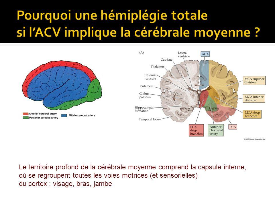Le territoire profond de la cérébrale moyenne comprend la capsule interne, où se regroupent toutes les voies motrices (et sensorielles) du cortex : vi
