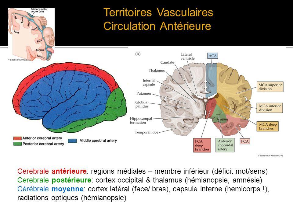 Territoires Vasculaires Circulation Antérieure Cerebrale antérieure: regions médiales – membre inférieur (déficit mot/sens) Cerebrale postérieure: cor