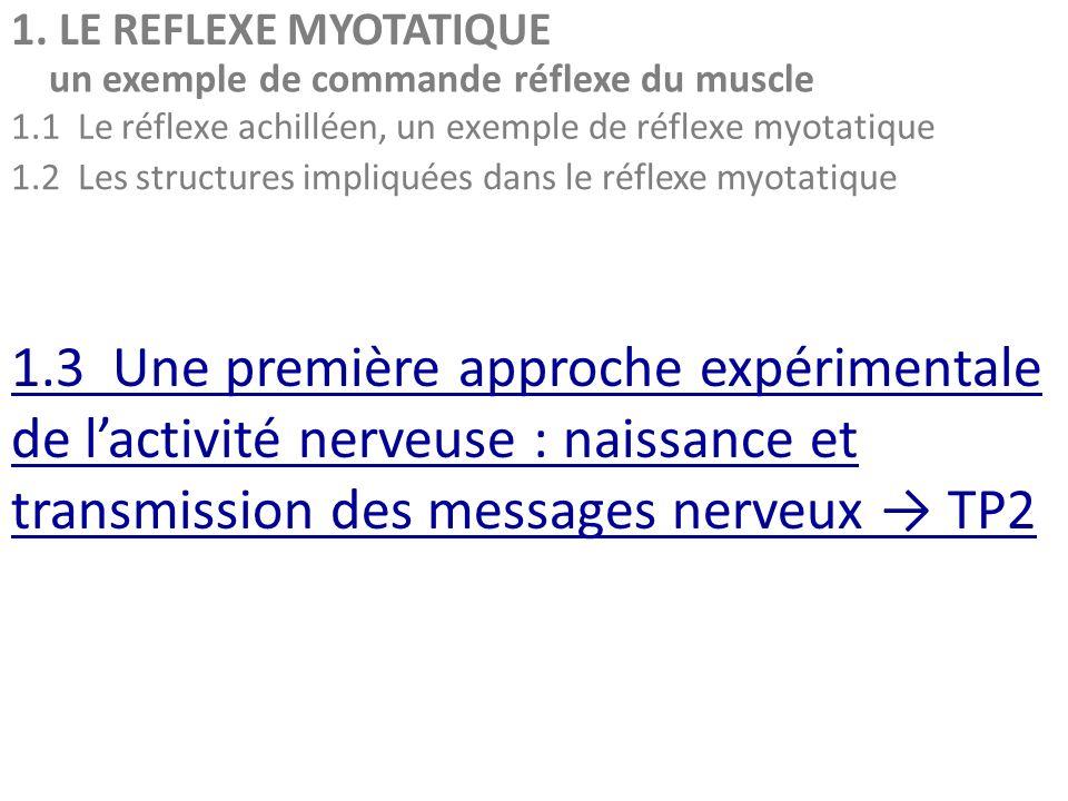 1. LE REFLEXE MYOTATIQUE un exemple de commande réflexe du muscle 1.1 Le réflexe achilléen, un exemple de réflexe myotatique 1.2 Les structures impliq